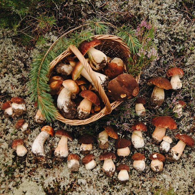let's go mushroom hunting even thought I don't like mushrooms!