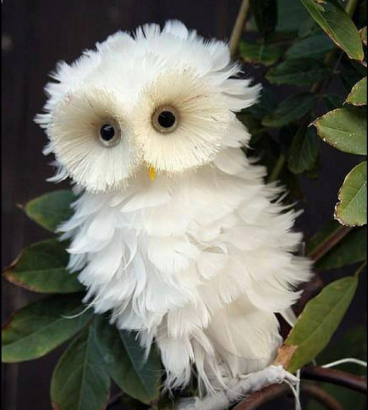 Is this owl even real? | Things that make me smile:D ...