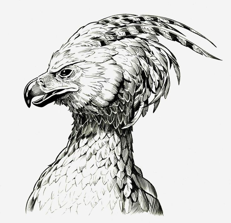 WB Product Art, Fawkes, HARRY POTTER AND THE CHAMBER OF SECRETS. Pencil. Never wanted to SEE another feather after I drew this character. But I had to, once the filmmakers altered Fawkes' design. B...