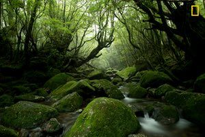 Yakushima – in Japan's Kagoshima prefecture – is an island full of abundant moss and beautiful water.