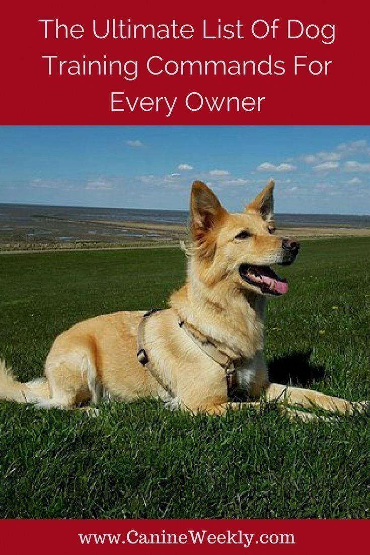 Best Dog Training Tricks Take Care Of The News Regarding Pet Food