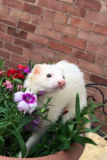 Schau Dir dieses fotogene Frettchen in seinem Blumentopf an! | 21 kleine Tiere, die im Internet viel zu wenig Beachtung finden