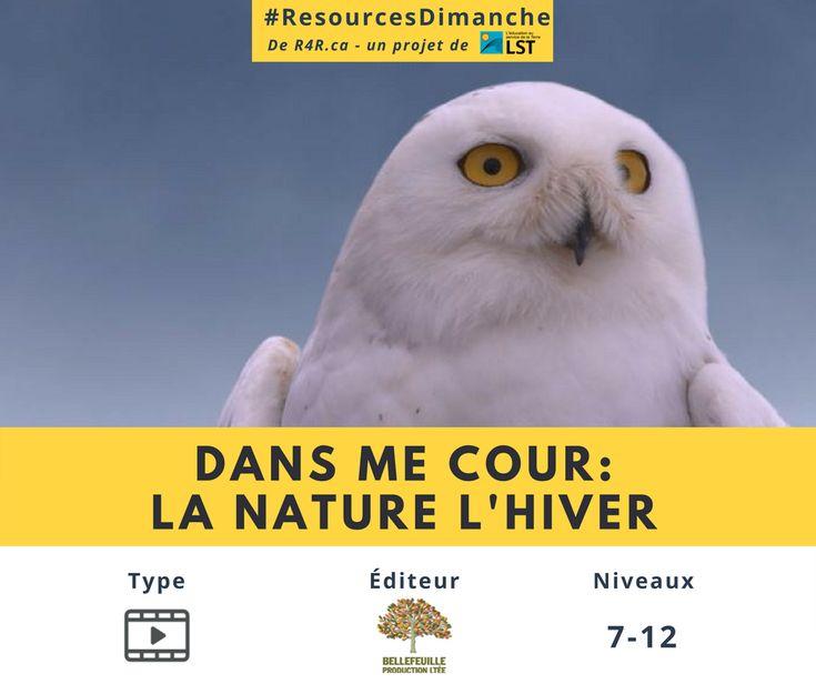 Cette semaine #ResourcesDimanche de #R4R.ca vous inspire à explorer plaisirs qu'on peut retirer de la nature l'hiver avec un série de vidéos, «Dans ma cour: la nature l'hiver».   Visitez http://resources4rethinking.ca/fr/resource/la-nature-lhiver?utm_source=Facebook&utm_medium=Social&utm_campaign=RS-4-JAN-2018 et téléchargez la ressource aujourd'hui pour commencer!