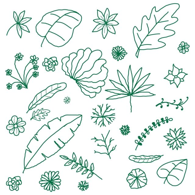 A Collection Of Tropical Leaf Vectors Leaves Leaf Tropical Leaves Png And Vector With Transparent Background For Free Download Leaves Vector Tropical Leaves Leaf Drawing
