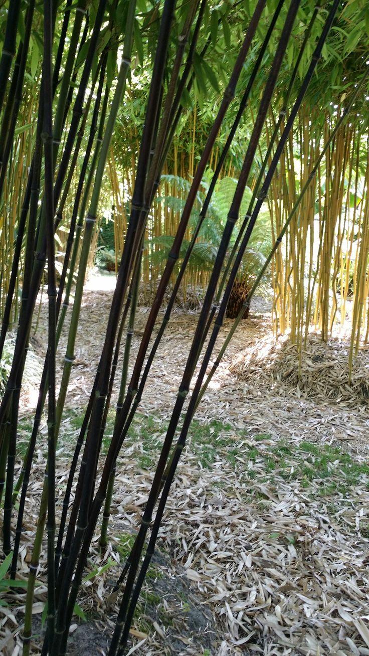 Meer dan 1000 ideeën over Bamboetuin op Pinterest - Bamboe planten ...