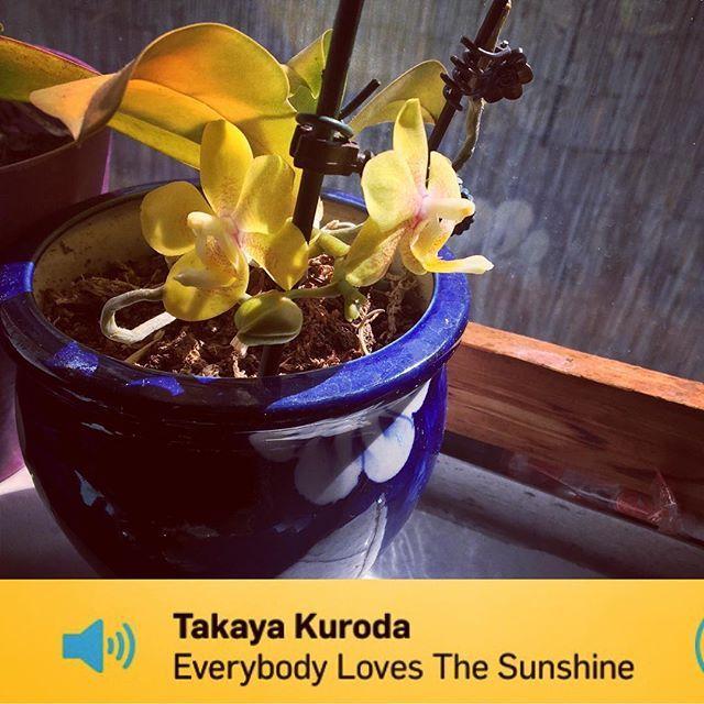 Windowsill #sunshine     #orchids #yellow  #plant #planttherapy  #music #kcrw #happy #joy #love #sunday #domingo #cannabis #cbd #cannabinoids #prayer #yoga #tribe #whateverittakes #depression #anxiety #ptsd #grief #recovery #ikeaflower #repot #pot #pottery #cobalt #theswellnesslife
