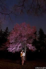 nighttime engagement shoot - Google Search