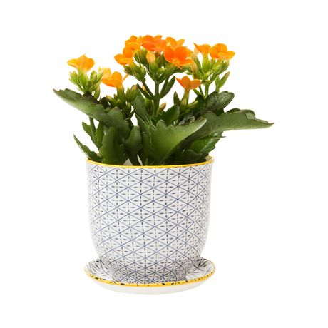 Modeled after classic teacups, this Brighton Pot and Saucer Planter will make a charming addition to your country-style or transitional home. This traditionally inspired design is decorated with delica...  Find the Brighton Pot and Saucer Planter, as seen in the An Artist's Hacienda Collection at http://dotandbo.com/collections/an-artists-hacienda?utm_source=pinterest&utm_medium=organic&db_sku=120204