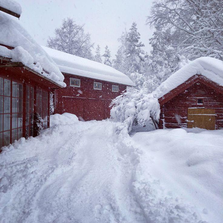 Winter @hannabruce place in Hälsingland, Sweden