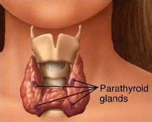 Optimiser la thyroïde pour une superbe vitalité et un poids santé ! par Ghislain Martel* Ayant une de mes filles qui est suivi pour une maladie auto- immune de la glande thyroïde :