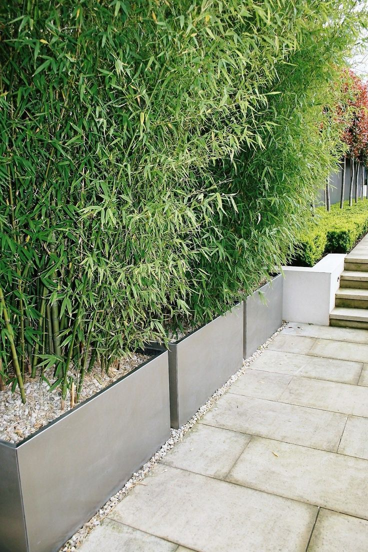 10 Bamboo Garden Ideas Most Of The Awesome And Lovely In 2020 Modern Landscaping Privacy Plants Modern Garden