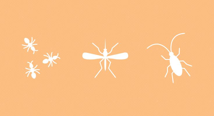 How to Get Rid of 11 Common Household Bugs