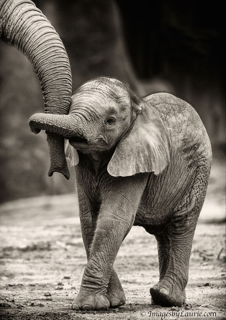 Baby Elephant Hug by Laurie Rubin, 500px: 6 week old baby elephant