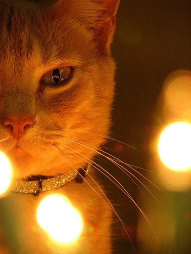 They say everything looks better in candlelight.  In my case, I'm not sure that is possible!