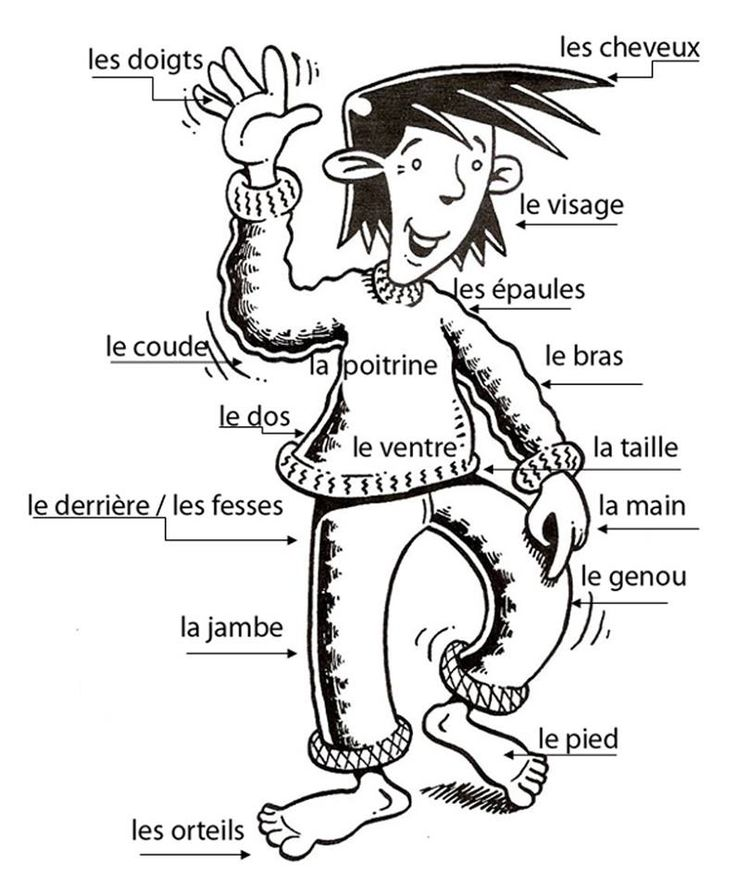 les parties du corps / doc à bidouiller en espagnol