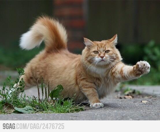 Lovely big ginger cat