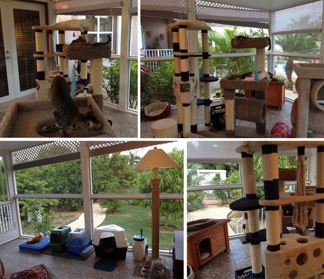 Best Catio Images On Pinterest Cat Furniture Cat Stuff And Cats