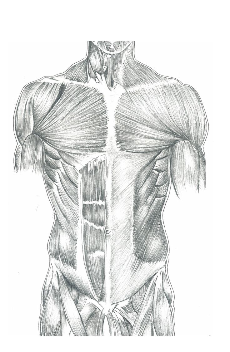 Anatomy Study Sketch - very old!