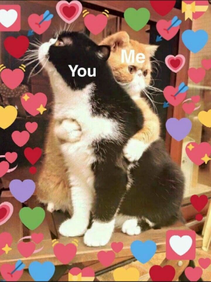 Cat Hearts Meme : hearts, Mina⁷, Twitter, Memes,, Memes