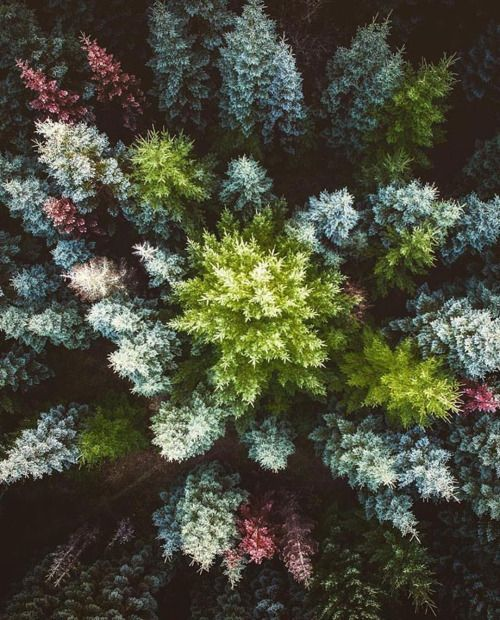 arist-world:Vertex | by @andrew.studer