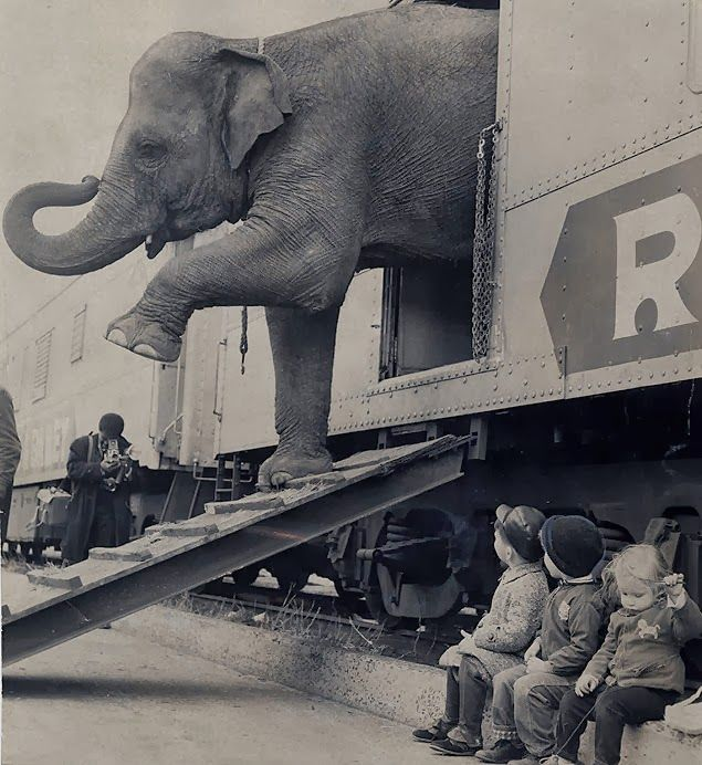 Ringling Bros Circus Train, ca. 1963