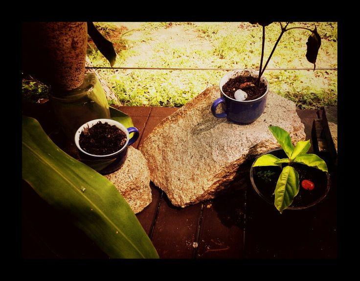 The garden begins