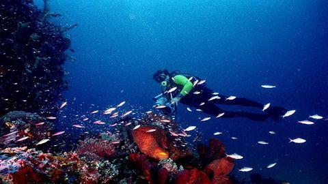 Pulau Bunaken : Inilah keindahan dasar laut Pulau Bunaken Manado. mau kesini? klik aja gambarnya!!