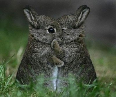 """'Listen!  Do you wanna know a secret? I'm in love with you-oo-oo-wa, closer, let me whisper in your ear..."""""""