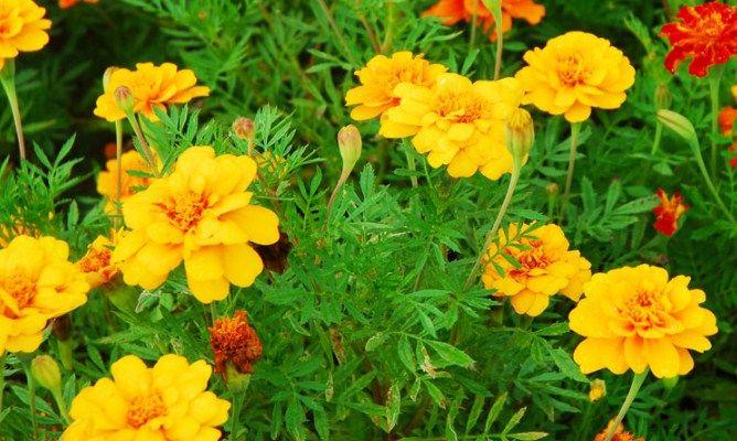 Pin Di Indonesia Herbs