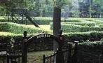 De grootste doolhof van Nederland dat dateert uit 1891. De doolhof is van haagbeuk en heeft een oppervlakte van 8740 m2, de lengte van de paden bedraagt 1188 meter en de breedte bedraagt 5 meter. In 1996 behaalde het doolhof het Guiness Book of Records als grootste ter wereld.Geregeld wordt er gewerkt met thema's.