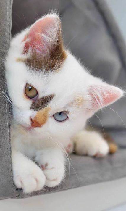 Look at the beautiful markings this kitty has <3