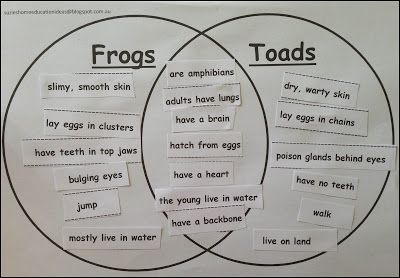 PRINTABLE Venn diagram on the differences/similarities between frogs and toads - Life Cycle of a Frog