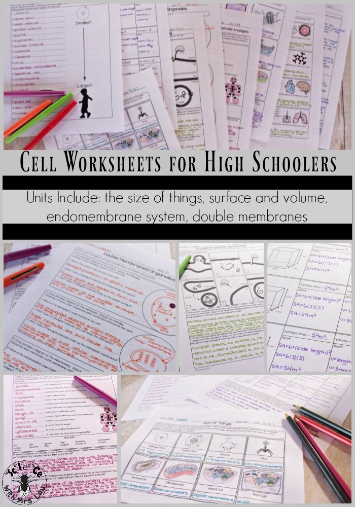 This set of cell worksheets aren't your normal color-in-your-cell pages!  These pages are specifically designed to help your students make connections between the different organelles, not simply regurgitate their functions.