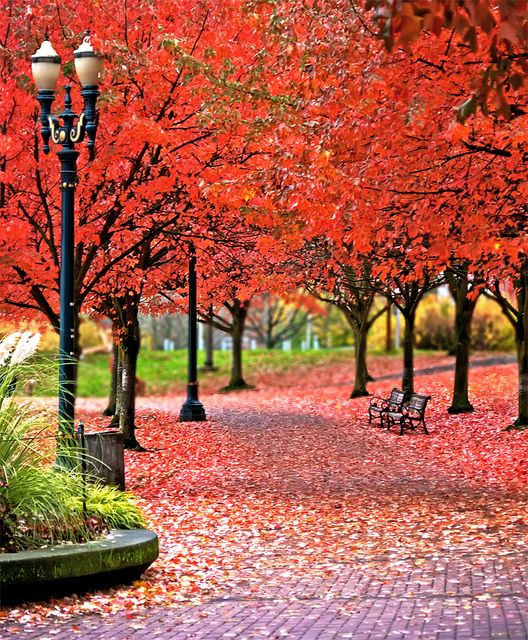 Fall at Tom McCall Waterfront Park - Portland, Oregon