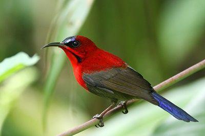 Infromasi Dunia Burung Terlengkap