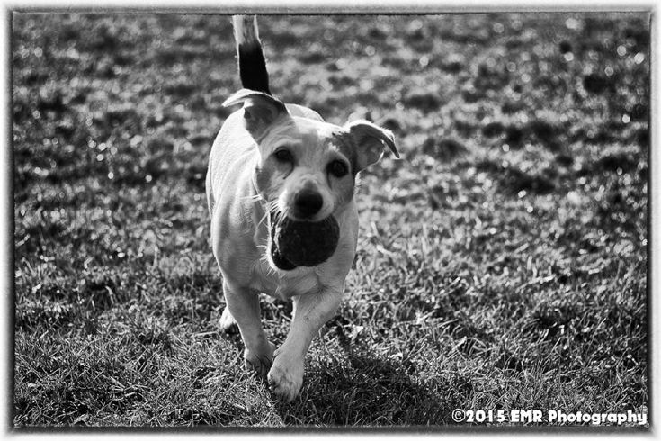 Dogg by EMR Photography