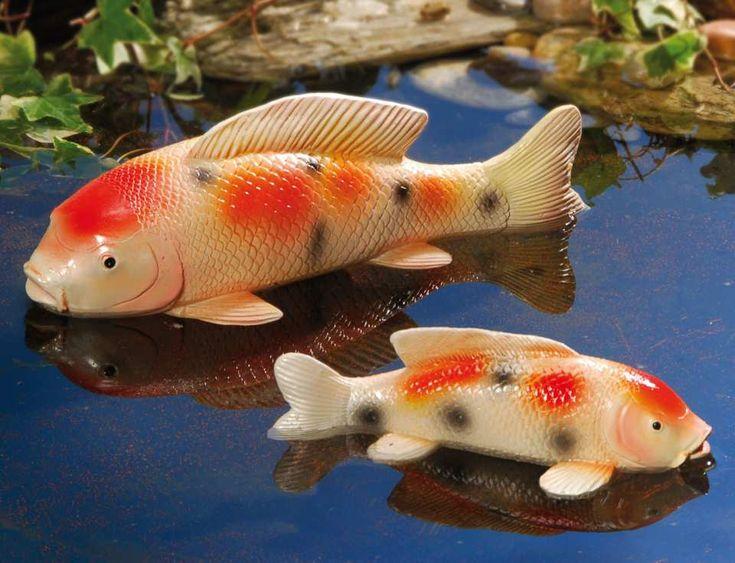 13 best images about teich co on pinterest deko for Koi fische im gartenteich