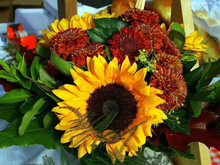 Słonecznik, Kwiaty, Kompozycja