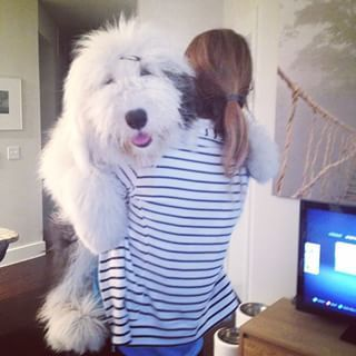 Rocco Instagram Profile Ink361 English Sheepdog