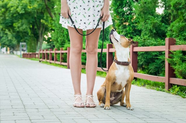 A recent poll finds that overall, dog owners are prepared to spend more cash on their pets health than cat owners.