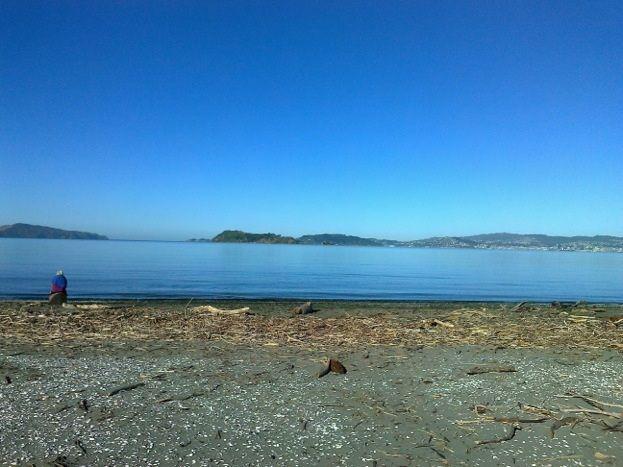 Petone Beach, New Zealand. www.krispearson.com
