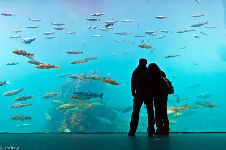 Me and my wife. Nobody around us in this norwegian aquarium. A silent traffic is moving in front of us. Peace.