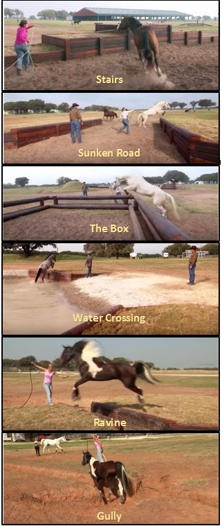 Obstacle course ideas for horses
