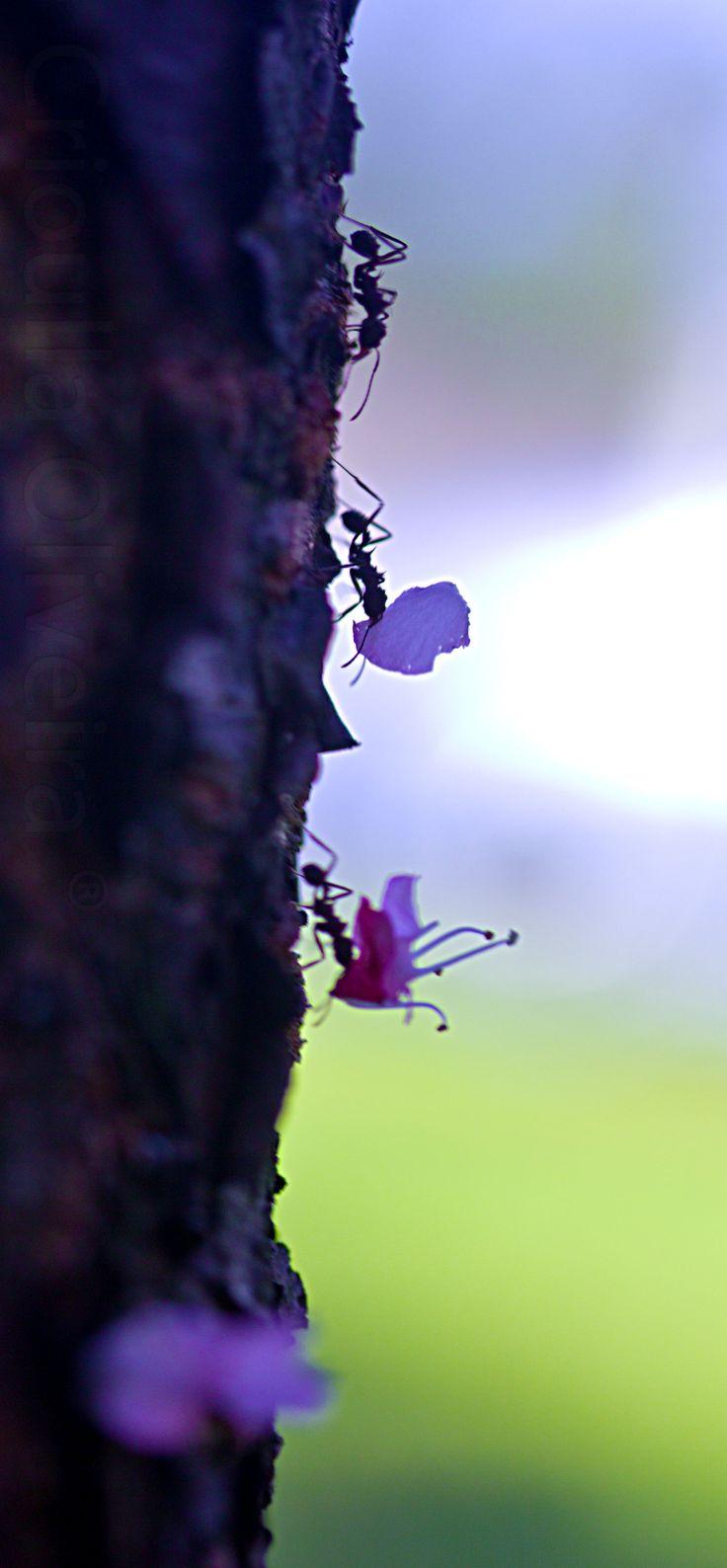 Proverbios 6:6-8 Ve a la hormiga, oh perezoso, mira sus caminos, y sé sabio; La cual no teniendo capitán, ni gobernador, ni señor, Prepara en el verano su comida, y recoge en el tiempo de la siega su mantenimiento. ♔