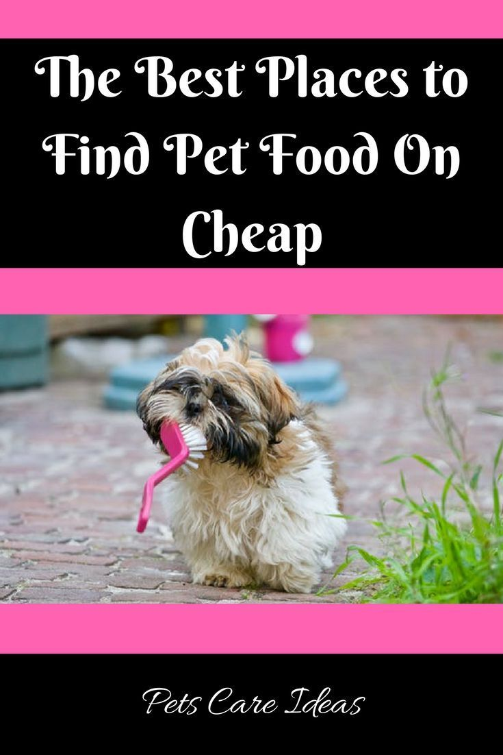 The Best Places To Find Pet Food On Cheap Find Pets Food