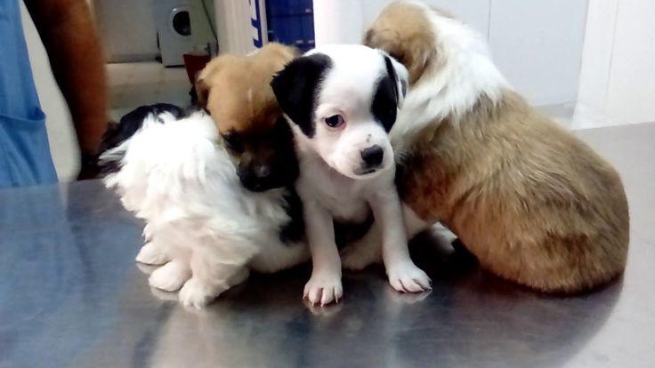 regalo cachorros , adopcion 618396258