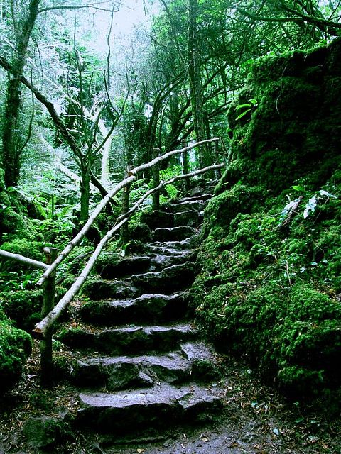 """"""" Puzzlewood is an ancient woodland site, near Coleford in the Forest of Dean, Gloucestershire, England. The site, covering 14 acres, shows evidence of open cast iron ore mining dating from the Roman period, and possibly earlier. In 1848 some..."""