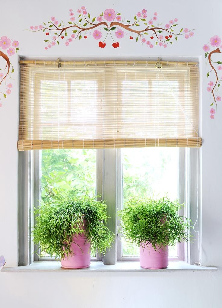 Rhipsalis in de #vensterbank. Leuk voor de kinderkamer, heerlijk roze.