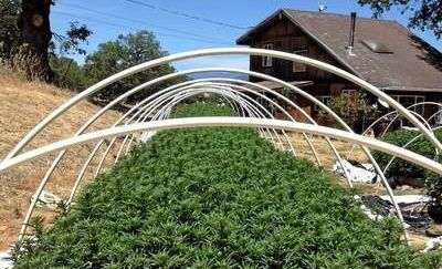 Humboldt County land prices skyrocket as cannabis investors move...