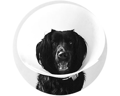Esterilización: Responsabilidad de todos #perros #mascotas #canes #magazine #esterilización #gatos # minino